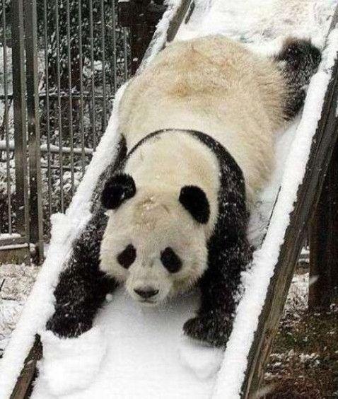 Abwärts mit und dank Panda?