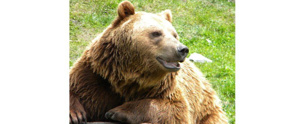 Mail.ru: Der russische Bär erwacht