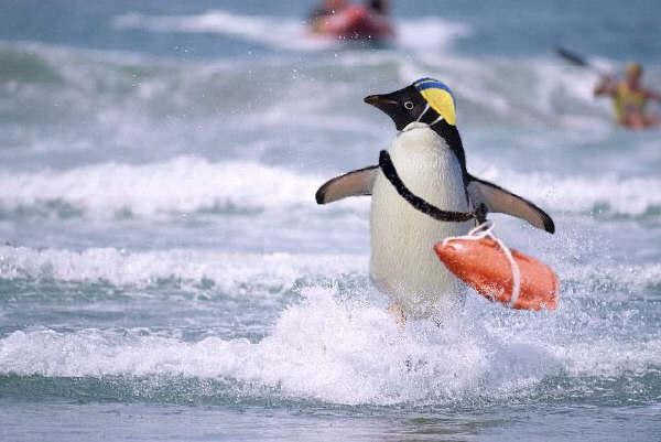 Der Penguin im WWW