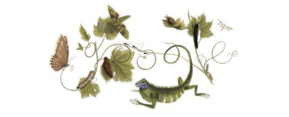 Google Doodle von heute: Maria Sibylla Merian