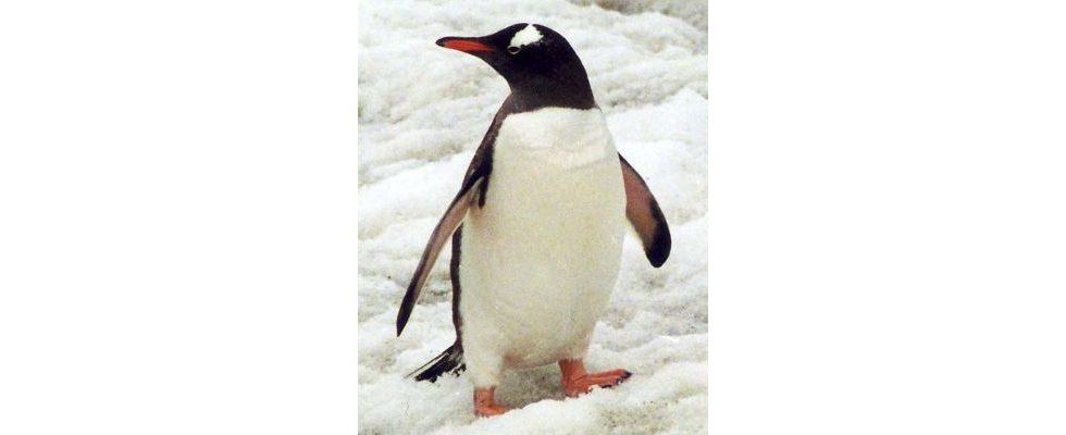 Penguin 2.0 ist live