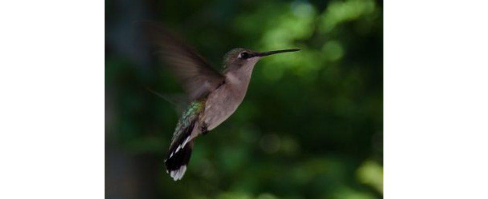 Entitäten und Hummingbird: kleiner Ausblick in die SEO Zukunft