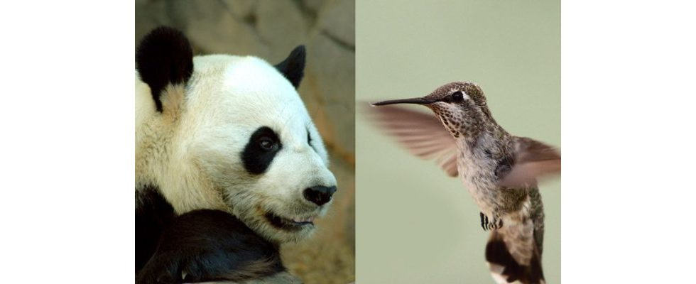 Der Google-Jahresrückblick aus SEO-Perspektive: Hummingbird, Panda & Co.