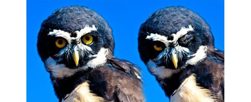 Zwillinge sind 40 Mal wahrscheinlicher als ein Banner-Klick
