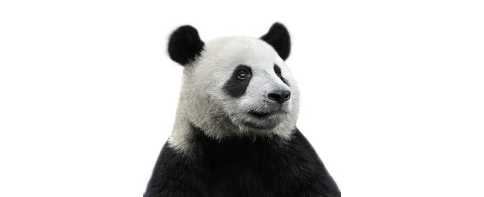 Was kommt da auf uns zu? Google kündigt Panda 4.0 an