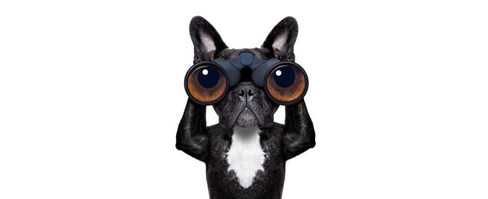 Link Audits: Analysierst Du noch oder rankst Du schon?