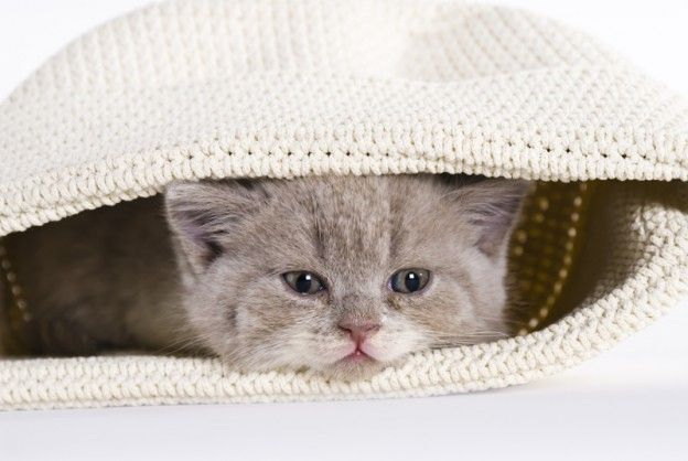 Die berühmte Katze im Sack / © Jill Peters - Fotolia.com
