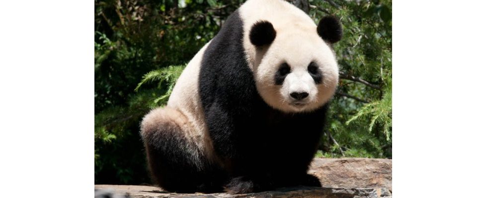 Leben ohne Panda-Phobie – 5 Schritte für ein sorgenfreies Webmaster-Dasein