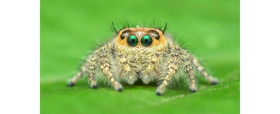 Infografik: Googles Crawler – wenn die Spinnen nicht mehr krabbeln