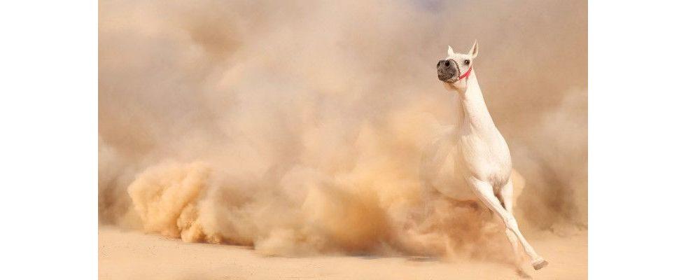 SEO und Content: Das Pferd wird heute von vorne aufgezäumt