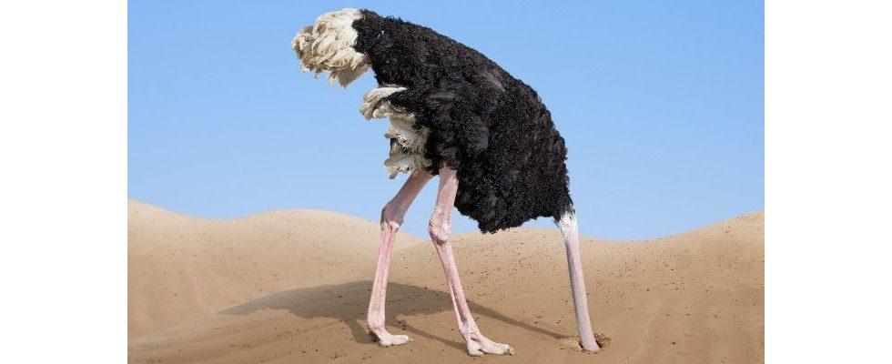 """Mobilegeddon"": Ist XING der große Verlierer des Google-Updates?"