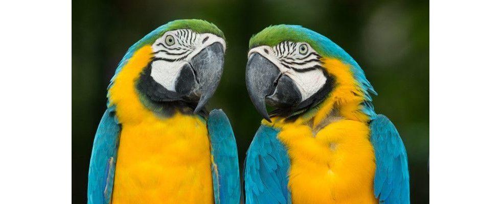 Eingebettete Tweets: Mehr als 140 Zeichen dank neuer Zitierfunktion