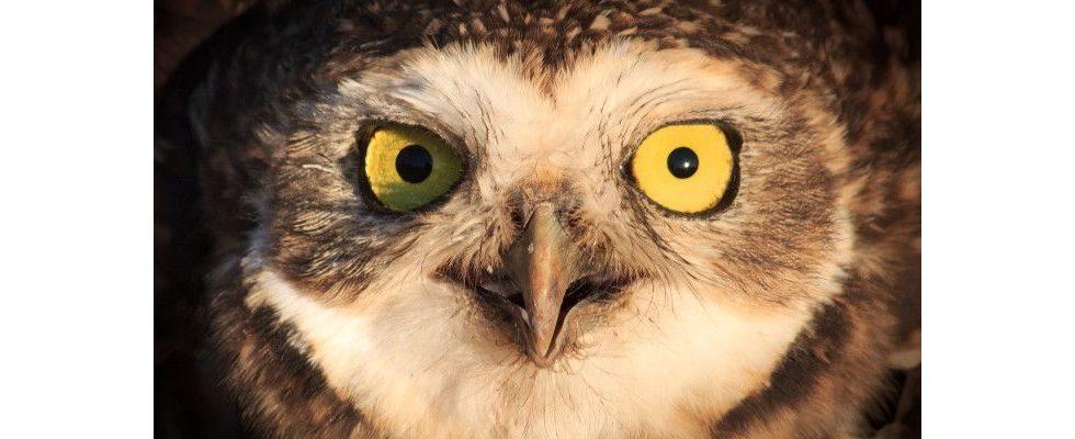Nachtgezwitscher: Wieso es sich lohnt nachts zu twittern