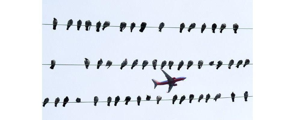 Eine Million Tweets analysiert – Was Kurznachrichten wirklich erfolgreich macht