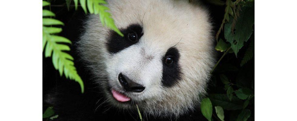 Von wegen Duplicate Content: Warum es bei Google Panda um viel mehr geht