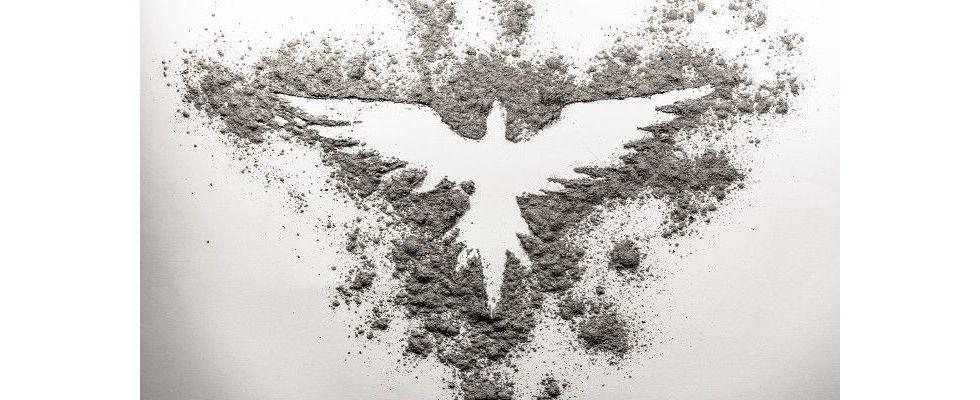 Wie Phoenix aus der Asche: So können Marken Vertrauen und Loyalität zurückgewinnen