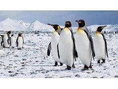 © Flickr / Antarctica Bound, CC BY-ND 2.0
