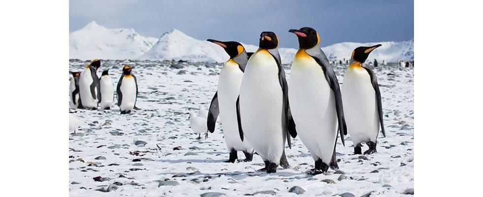Google Penguin 4.0 – Startschuss für lang angekündigtes Update gefallen