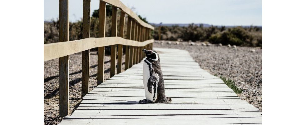 Wie Google bestraft – Ex-Googler Jonas Weber mit Insights zum Penguin 4.0 Update