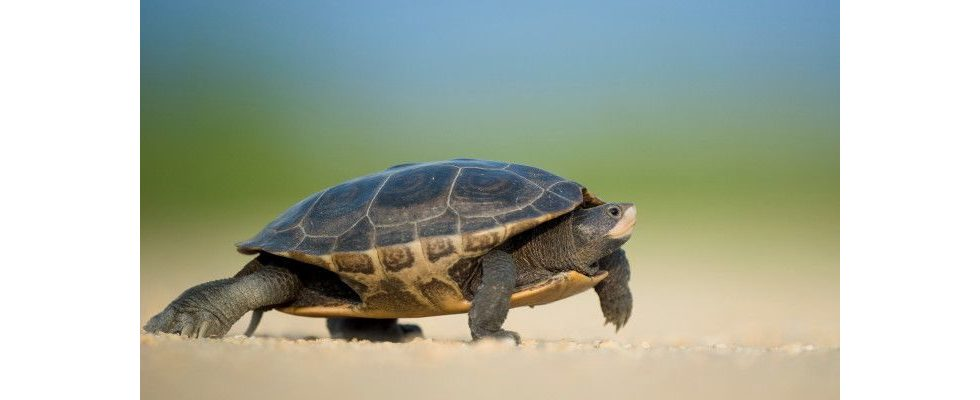 Zeit ist Geld: 12 Gründe für eine schnellere Website