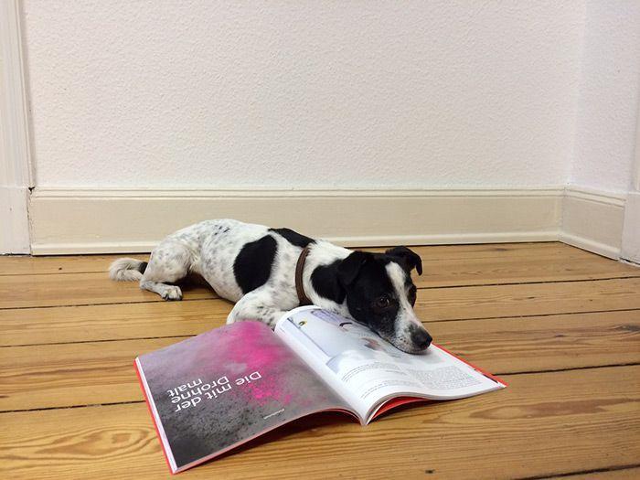 Bürohund Pico bei der Arbeit