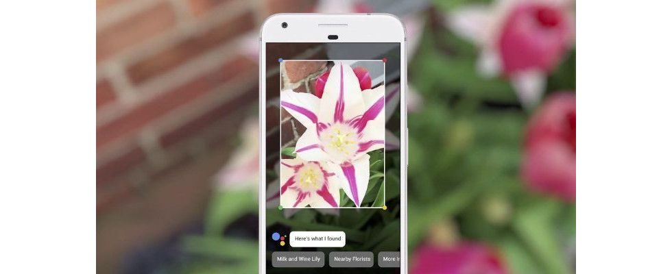 Blick in die Zukunft: Bildersuchfunktion Google Lens entschlüsselt in Echtzeit, was du siehst