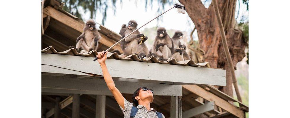 Wildlife Selfie Trend: Instagram führt Alarm zum Schutz vor der Ausbeutung von Tier und Natur ein