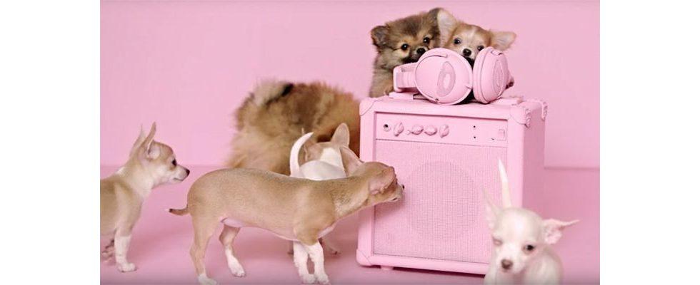 Adoptify: Tierschutzverein München vermittelt Hunde auf Basis des Musikgeschmacks