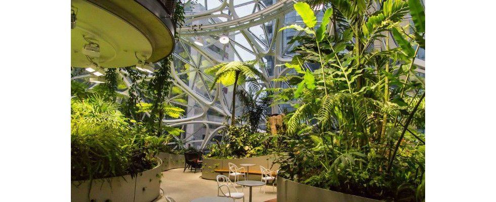 Grünes Büro: Welche Vorteile Pflanzen im Office bringen