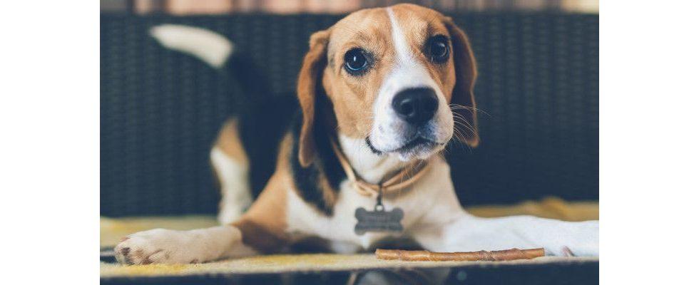 Holt die Hunde ins Büro! Warum die Vierbeiner Vorteile ins Office bringen