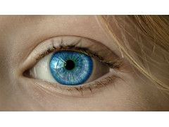 Auge Retina