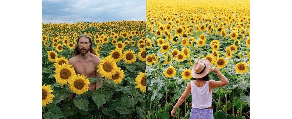 """""""Zombie Apocalypse"""": Tausende Instagrammer überrennen Sonnenblumenfarm"""