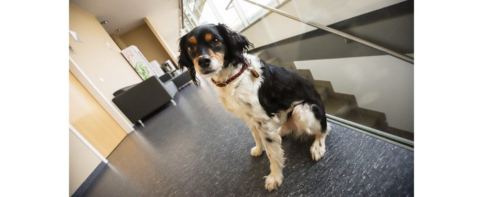 5 Fragen zum Thema Bürohund geklärt: Die besten Kollegen sind pelzig