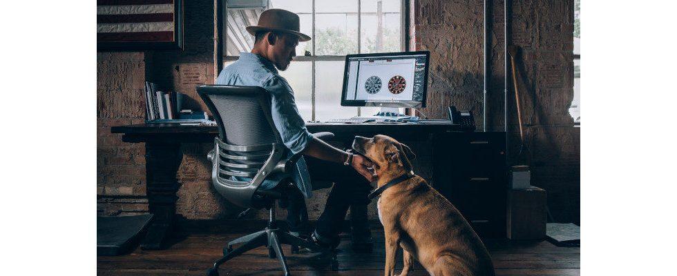 Bürohunde als Feel Good Manager: Was gibt es zu beachten?