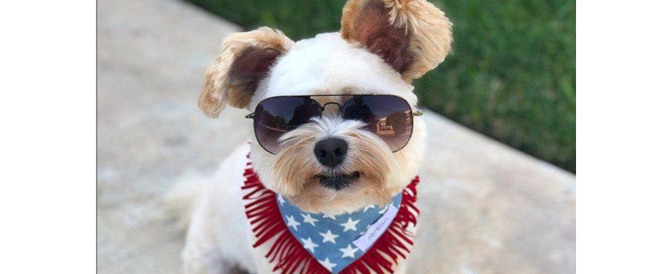 Von Dog Content und Petfluencern: Wie Tiere erfolgreiches Marketing betreiben