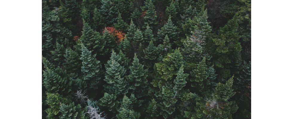 Evergreen Content: Dein Guide zu langfristigem Erfolg im Ranking
