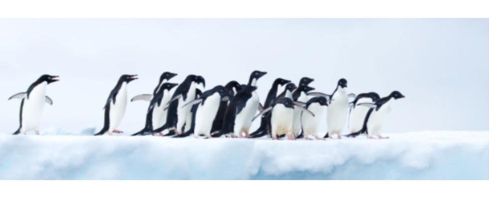 Kurz erwähnt: Ehrentag der Pinguine