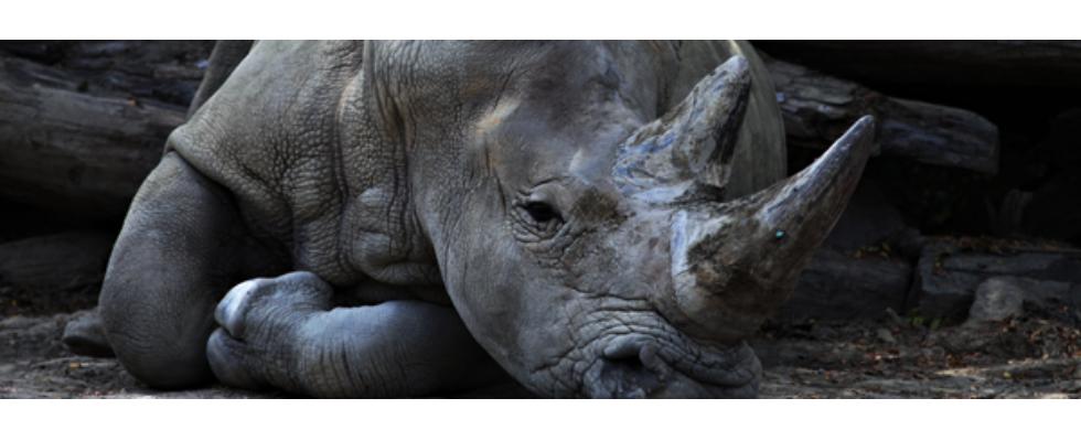 Kurz erwähnt: Internationaler Tag des Artenschutzes