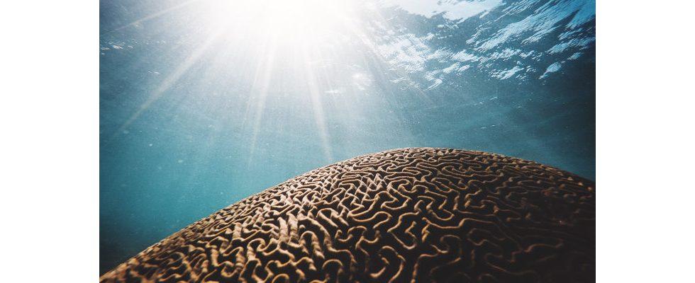 Brainteaser: So meisterst du Logikrätsel und Fangfragen im Bewerbungsgespräch