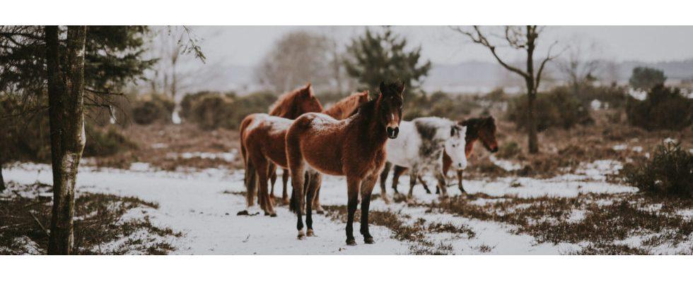 Kurz erwähnt: Die Geschichte der Blumento-Pferde