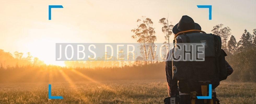 Auf ins Abenteuer mit unseren Jobs der Woche