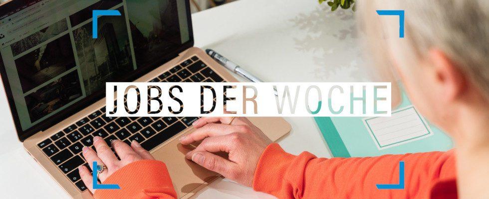 Jobs der Woche: Die Digitalbranche hat Raum für dich