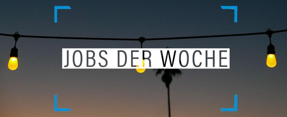 Jobs der Woche: Noch diesen Sommer zum Traumjob