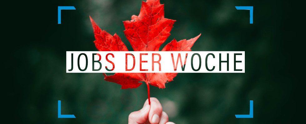 Herbst-Blues? Nicht mit unseren Jobs der Woche